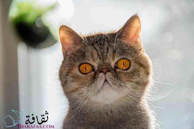 اجمل اسماء قطط اناث كورية-موقع ثقافة.كوم 1