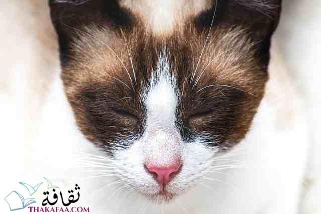اجمل اسماء قطط اناث اسبانية -موقع ثقافة.كوم