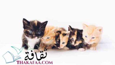 صورة احدث و اجمل اسماء قطط اناث روعة