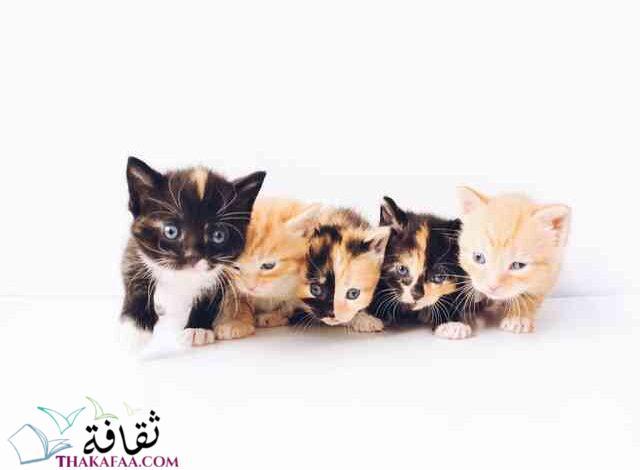 اجمل اسماء قطط اناث-موقع ثقافة.كوم