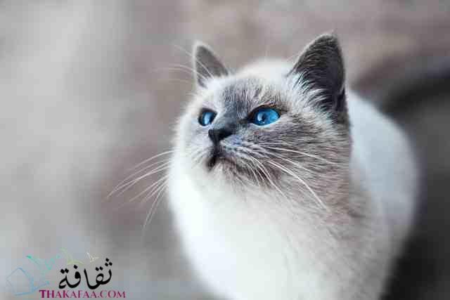 اجمل اسماء قطط اناث روعة-موقع ثقافة.كوم