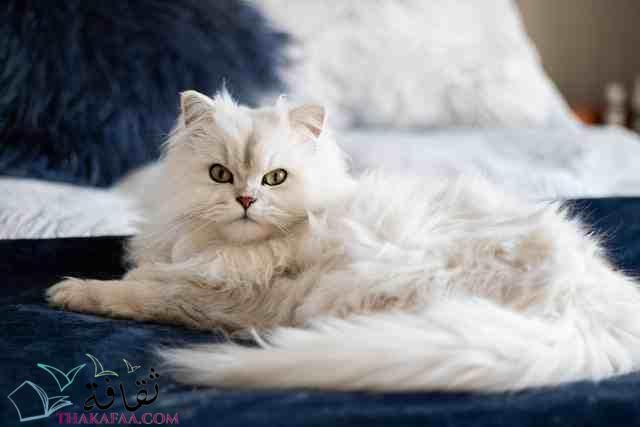 اروع اسماء قطط اناث تركية