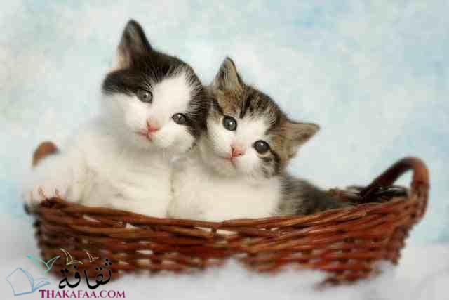 اروع اسماء قطط اناث ملكية