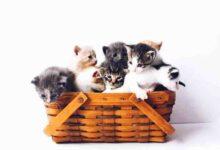 صورة اروع اسماء قطط اناث و ذكور