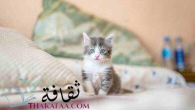 صورة احدث اسماء قطط ذكور سهلة و جديدة 2021