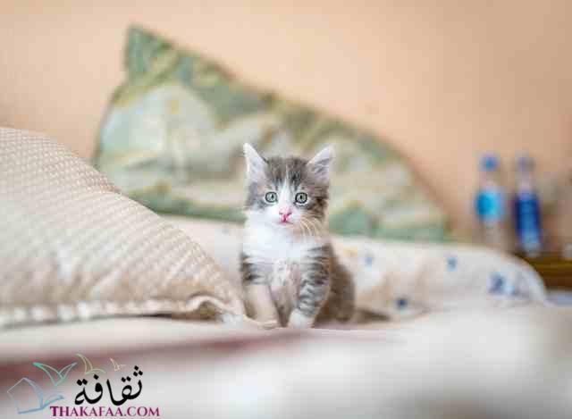 اسماء قطط ذكور جميلة