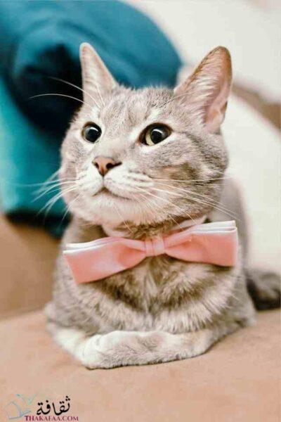 اسماء قطط ذكور ملكية