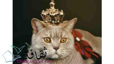 صورة اجمل اسماء قطط ملكية اناث و ذكور 2021