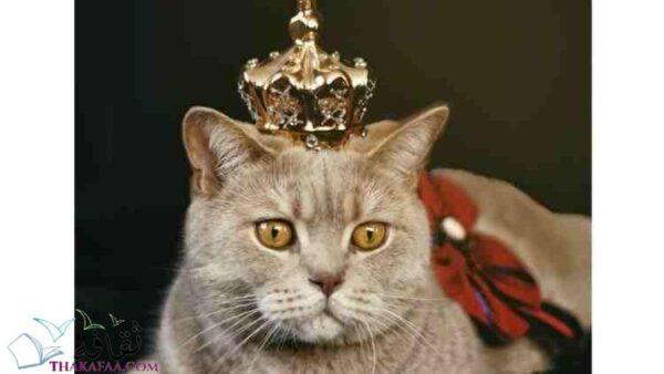 اسماء قطط ملكية اناث وذكور موقع ثقافة.كوم