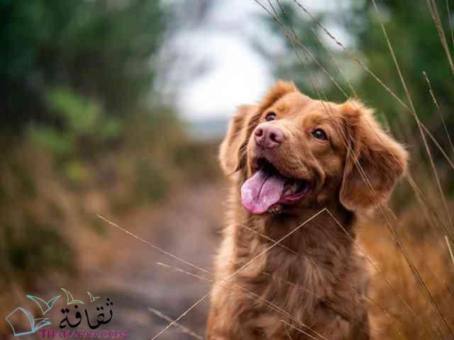 افضل اسماء كلاب ذكور موقع ثقافة.كوم