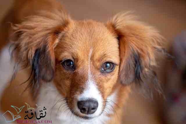 افضل اسماء كلاب اناث جديدة و مميزة-موقع ثقافة.كوم