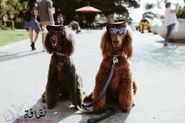 افضل اسماء كلاب ذكور واناث-موقع ثقافة.كوم 1