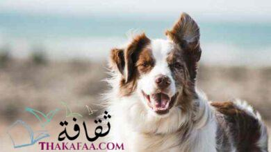 صورة اجمل اسماء كلاب ذكور واناث 2021