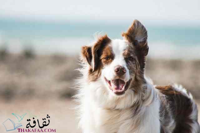 افضل اسماء كلاب ذكور واناث-موقع ثقافة.كوم