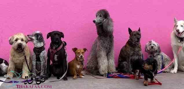 معلومات عن الكلاب موقع ثقافة.كوم