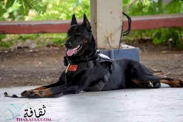 معلومات عن الكلاب و انواعها موقع ثقافة.كوم