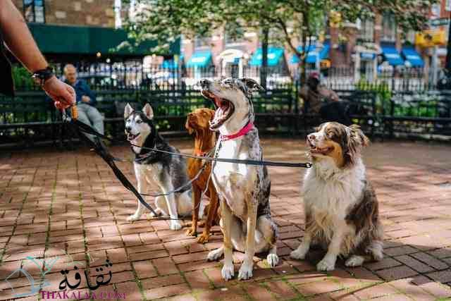 معلومات و حقائق عن الكلاب موقع ثقافة.كوم
