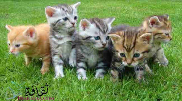 أغرب معلومات عن القطط لن تتوقعها ابدا-موقع ثقافة.كوم