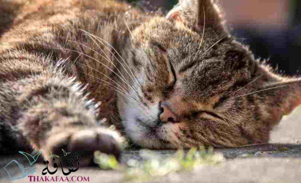 احلام القطط - معلومات عن القطط لن تتوقعها ابدا-موقع ثقافة.كوم