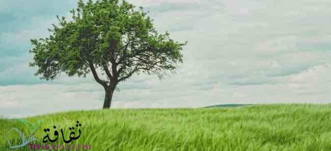 بحث عن البيئة والتلوث موقع ثقافة.كوم