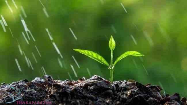 بحث عن البيئة والتلوث - موقع ثقافة.كوم