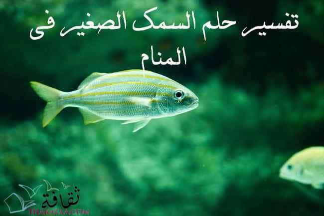تفسير حلم السمك الصغير في المنام