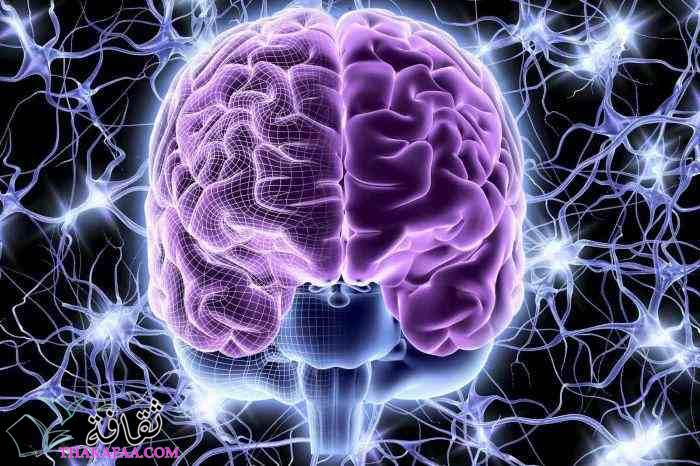 أفضل دكتور مخ واعصاب