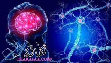 صورة أشهر وأفضل دكتور مخ واعصاب في القاهرة 2021